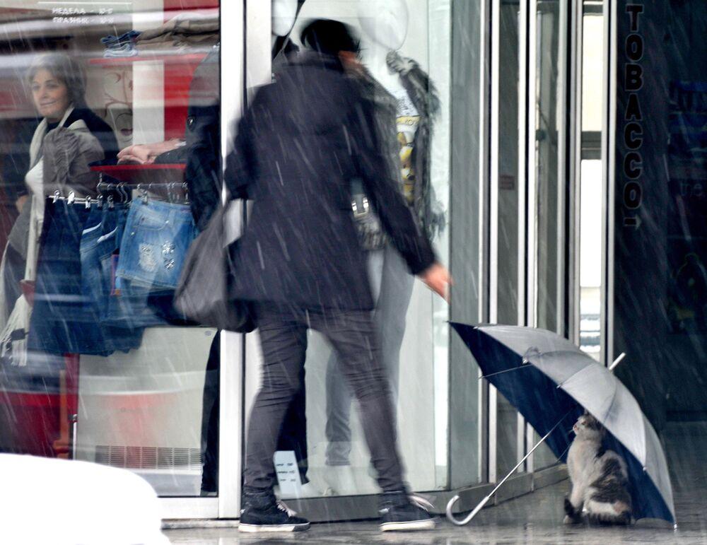 Un gatto cerca di nascondersi sotto un ombrello davanti a un negozio a Skopje, Macedonia.