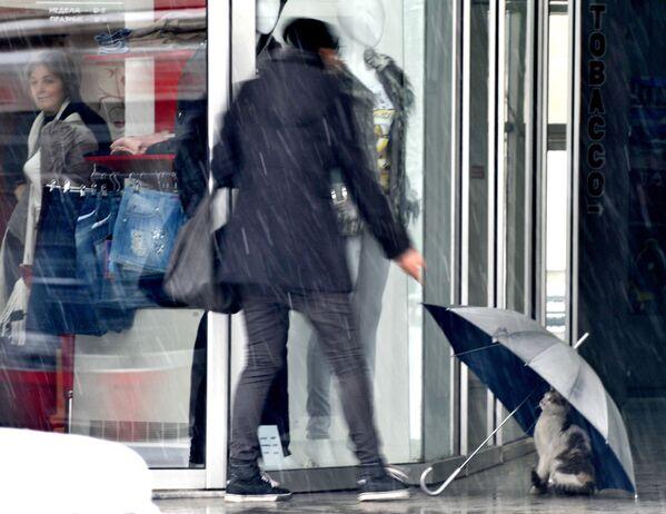 Un gatto cerca di nascondersi sotto un ombrello davanti a un negozio a Skopje, Macedonia.  - Sputnik Italia