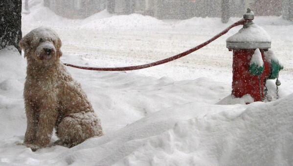 Un cane triste legato a un idrante antincendio sta aspettando il suo proprietario.  - Sputnik Italia