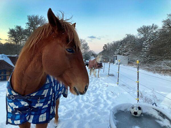 Un cavallo in una coperta vicino all'abbeveratoio con l'acqua congelata in Texas, USA.  - Sputnik Italia
