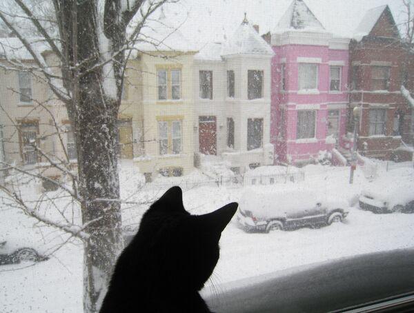 Un gatto guarda dalla finestra su una strada innevata a Washington, USA.  - Sputnik Italia
