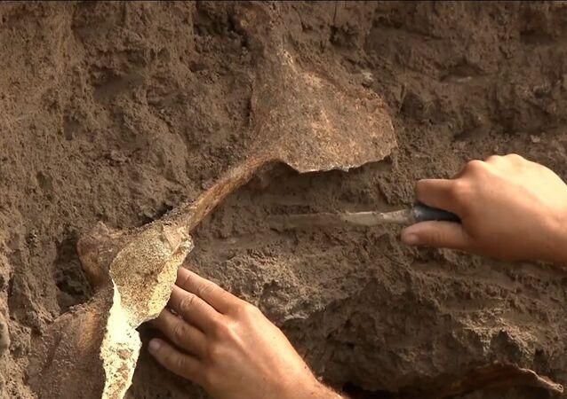 Argentina: conchiglia di Glyptodon trovata sulla spiaggia di Camet Norte