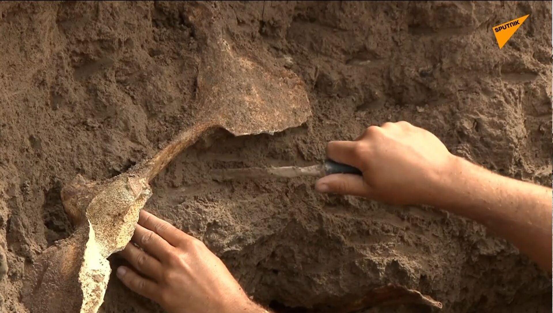Argentina: conchiglia di Glyptodon trovata sulla spiaggia di Camet Norte - Sputnik Italia, 1920, 23.02.2021