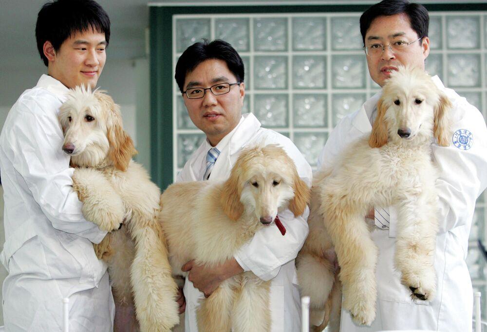 Il professore dell'università nazionale di Seoul mostra i cani clonati