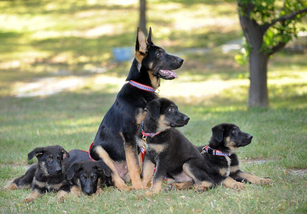 I cuccioli da pastore tedesco clonati sono stati presentati in un conferenza di stampa a Los Angeles in 2019
