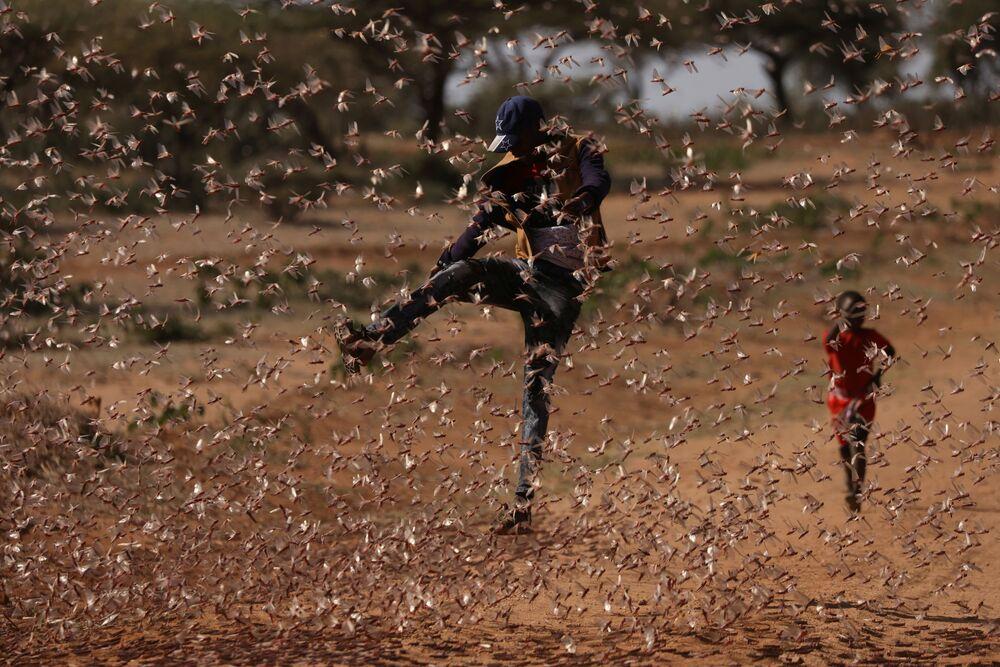 Un uomo fa di tutto per evitare l'attacco delle locuste in Kenya