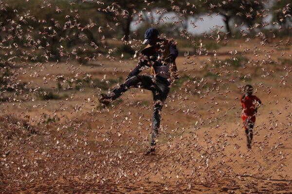 Un uomo fa di tutto per evitare l'attacco delle locuste in Kenya  - Sputnik Italia