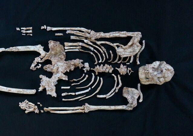 Lo scheletro più completo dell'Australopithecus Little Foot trovato nella Grotta di Sterkfontein, in Sud Africa