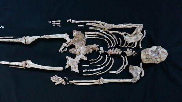 Lo scheletro più completo dell'Australopithecus Little Foot trovato nella Grotta di Sterkfontein, in Sud Africa - Sputnik Italia