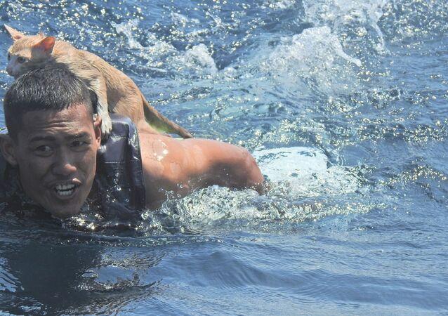 Un ufficiale della Marina thailandese con un gatto salvato
