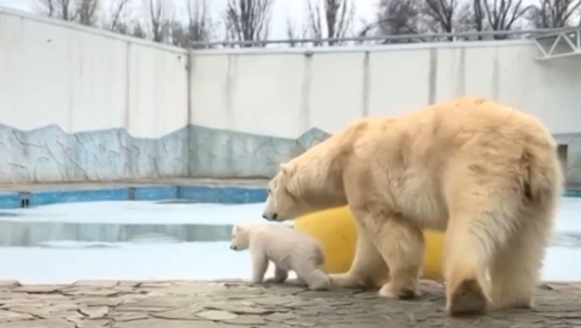Primi passi: la mamma orso porta il cucciolo a fare una passeggiata per la prima volta - Sputnik Italia, 1920, 04.03.2021