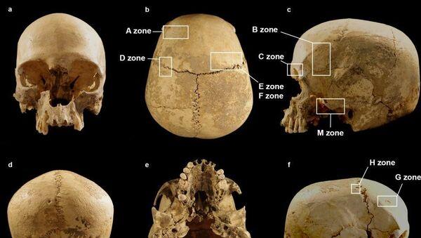 Teschio della grotta di Marcel Lubens - Sputnik Italia