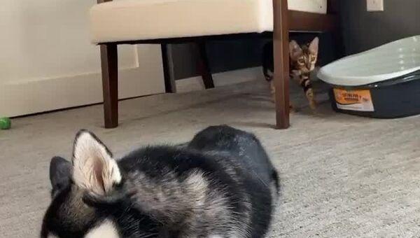 Kot i pies - Sputnik Italia