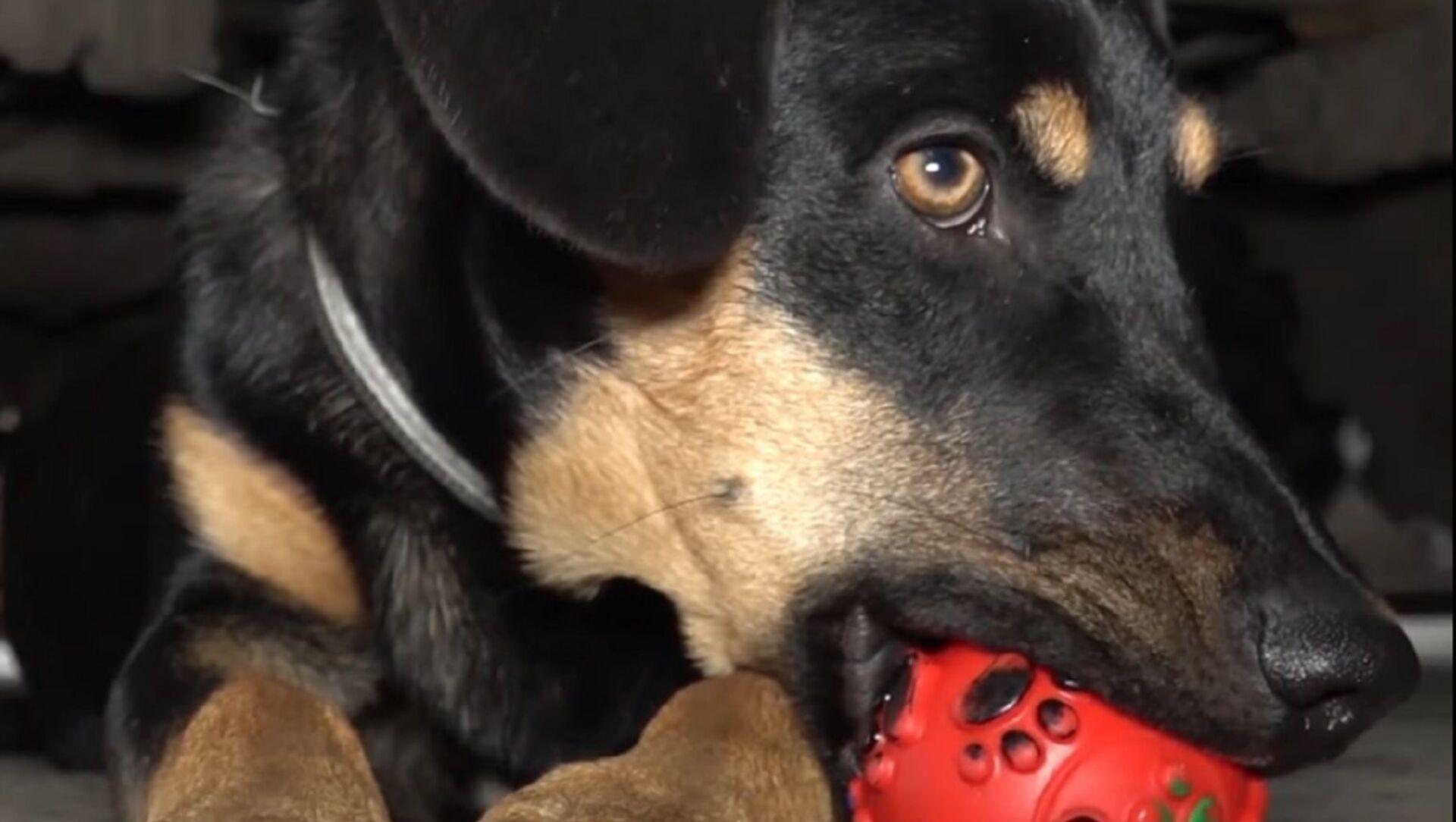 Russia: cucciolo salvato dall'incendio diventa membro della squadra di Vigili del fuoco - Sputnik Italia, 1920, 06.03.2021