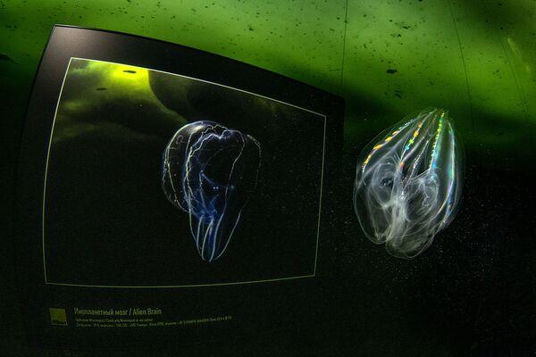 La prima mostra al mondo sotto il ghiaccio è stata aperta nel Mar Bianco oltre il Circolo Polare Artico - Sputnik Italia