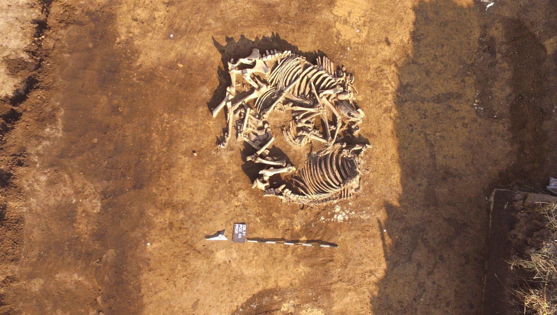 Polonia, archeologi scoprono uno dei più grandi complessi di tombe megalitiche del Paese - Sputnik Italia, 1920, 11.03.2021