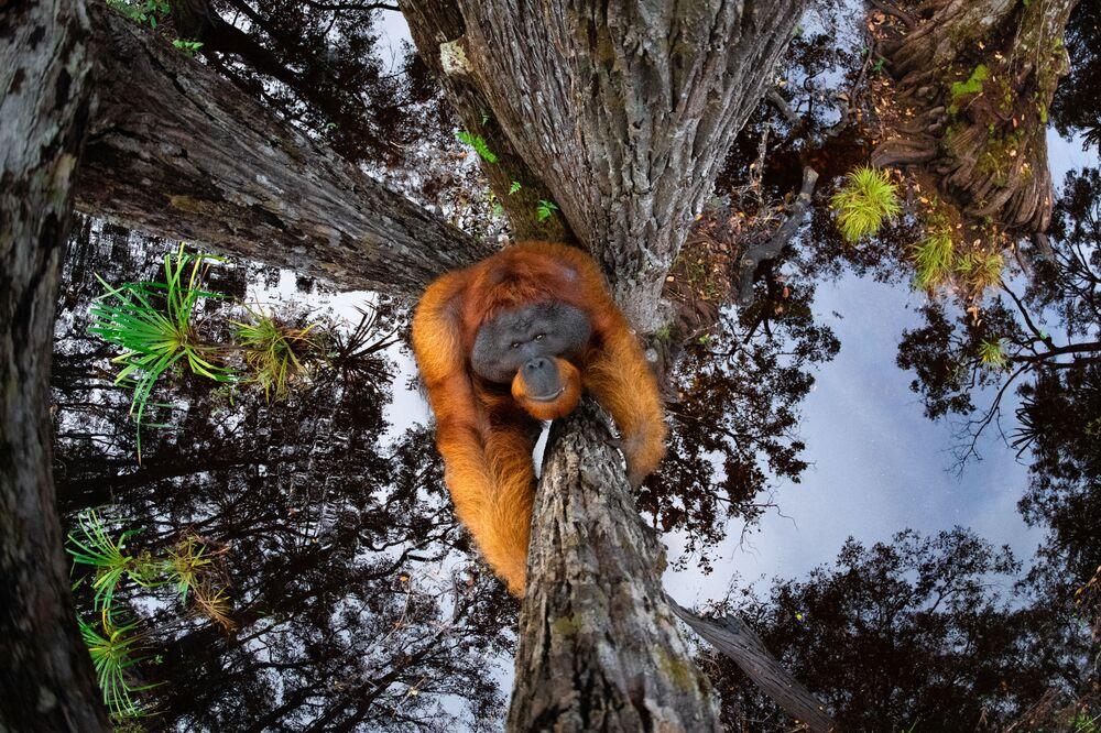 La foto Il mondo sta andando sottosopra del fotografo canadese Thomas Vijayan, che ha conquistato il 1 posto nella categoria Animali nel loro habitat ed è diventata la vincitrice del concorso World Nature Photography Awards 2020