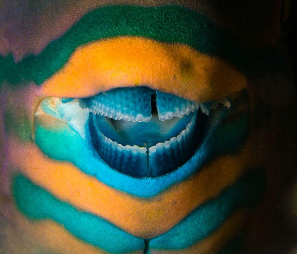 La foto Il vero joker del fotografo greco Pavlos Evangelidis, che ha conquistato il 3 posto nella categoria L'arte della natura del concorso World Nature Photography Awards 2020