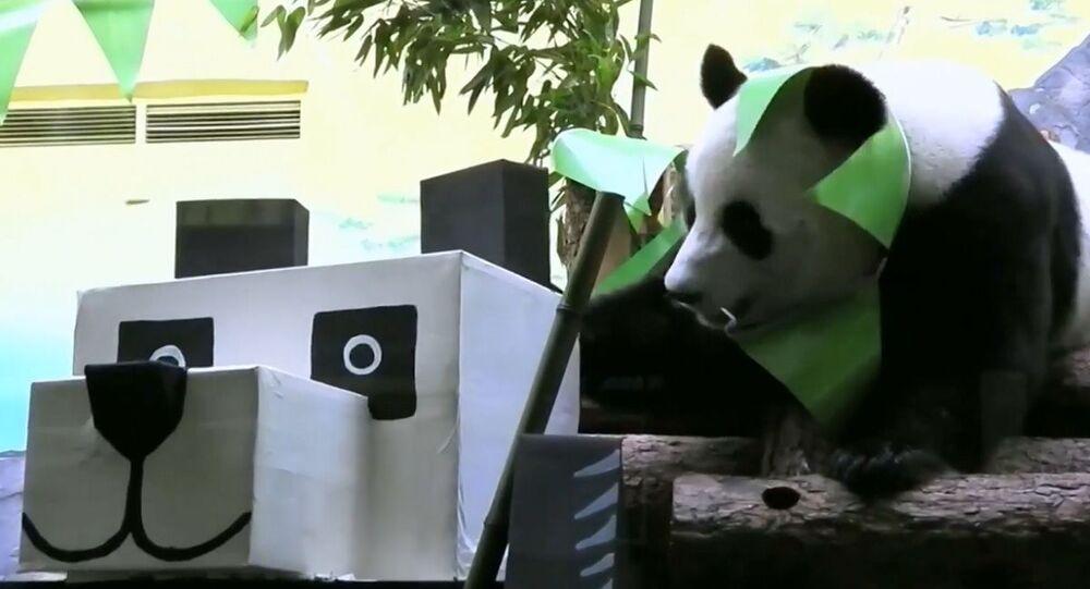 Panda nello zoo di Mosca