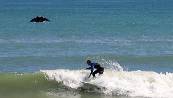 Una manta gigante prende le luci della ribalta da un surfista - Sputnik Italia