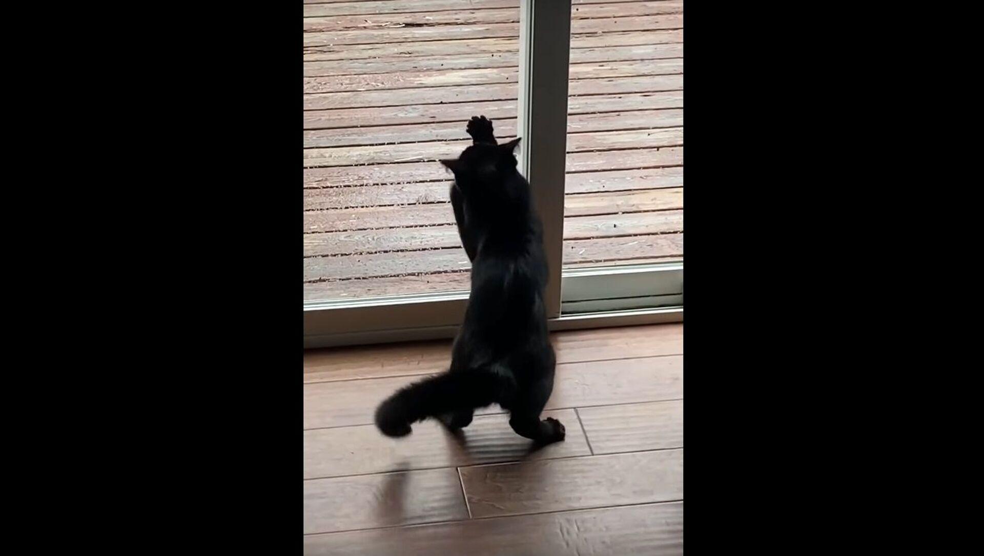 Kitten Doesn't Understand Glass Yet || ViralHog - Sputnik Italia, 1920, 18.03.2021
