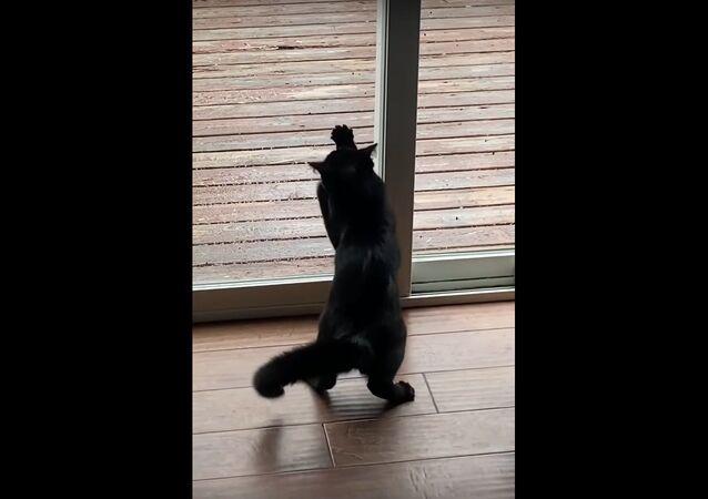 Gatto in lotta contro vetro