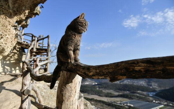 Кошка на территории пещерного монастыря Челтер-Мармара, расположенного на обрыве горы Челтер-Кая в Крыму - Sputnik Italia