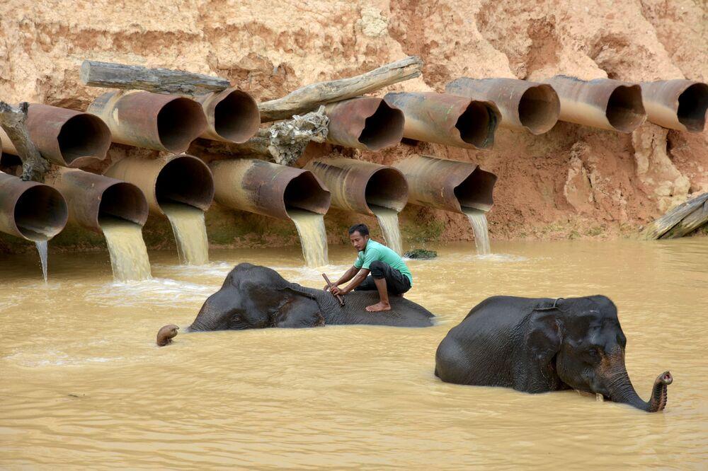 Il bagno degli elefanti nella provincia di Riau, Indonesia