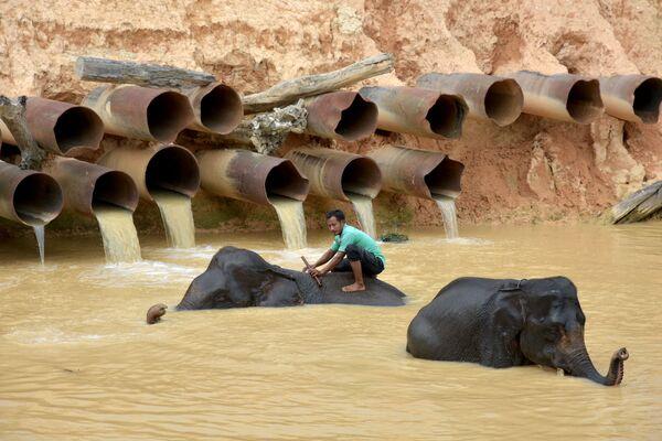 Il bagno degli elefanti nella provincia di Riau, Indonesia - Sputnik Italia