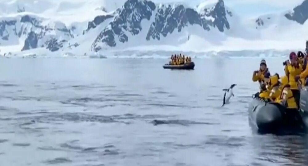 Il pinguino è saltato sulla barca