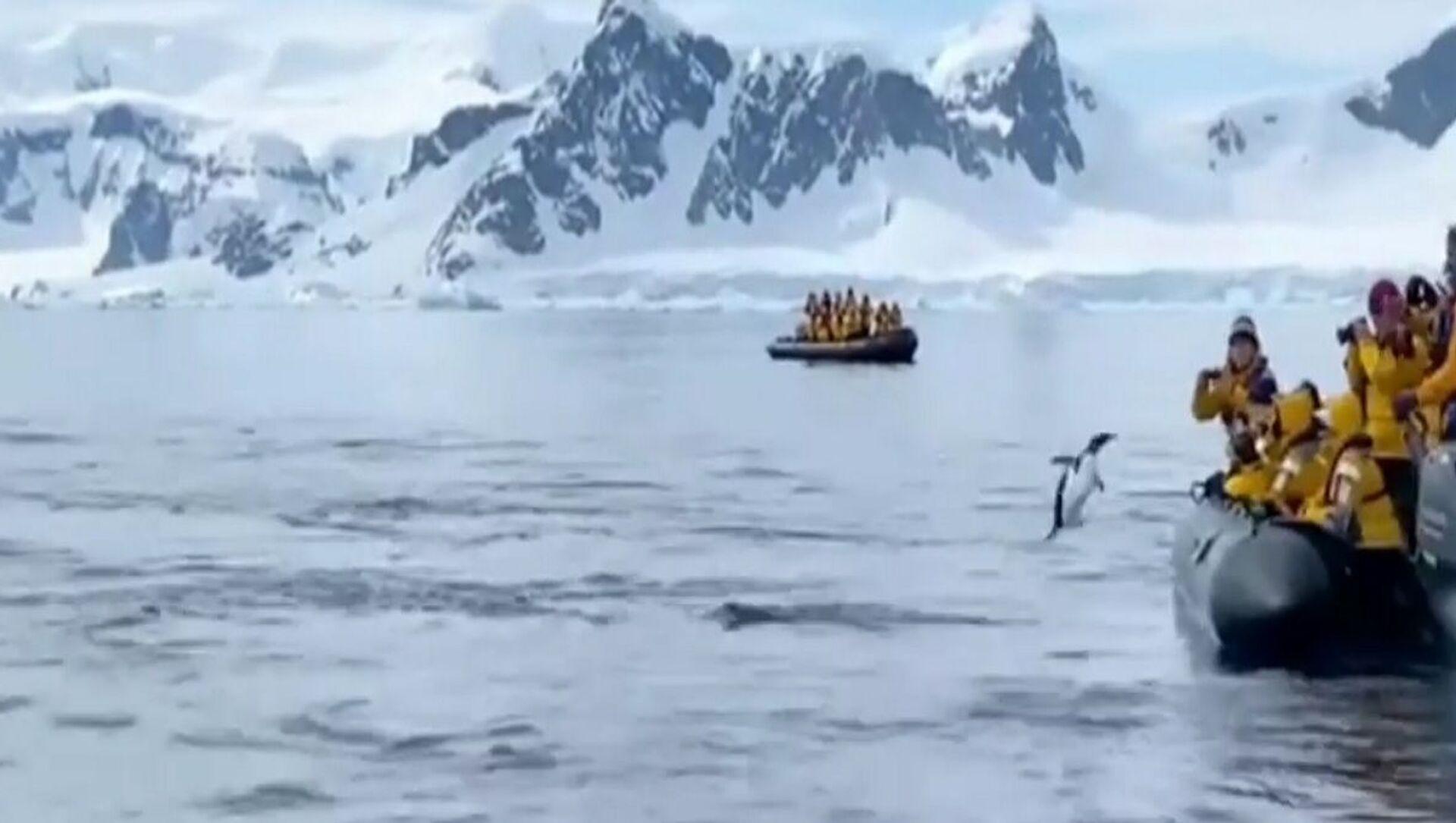 Il pinguino è saltato sulla barca - Sputnik Italia, 1920, 19.03.2021