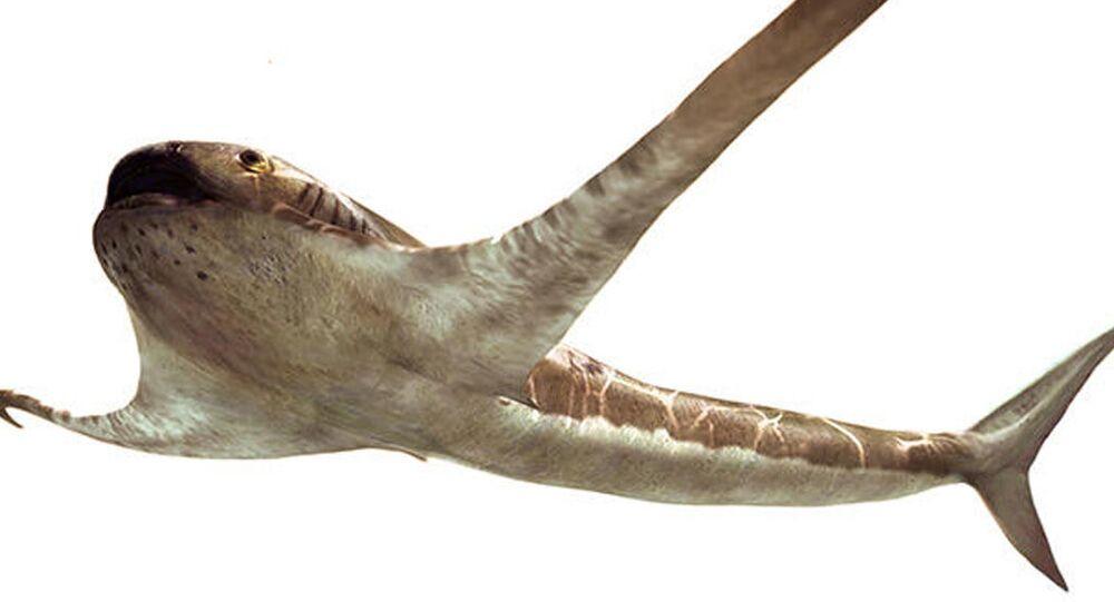 Aquilolamna milarcae