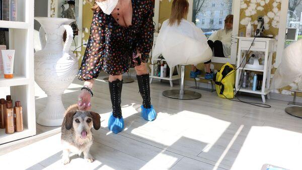 Cane in una bottega di barbiere a Milano - Sputnik Italia