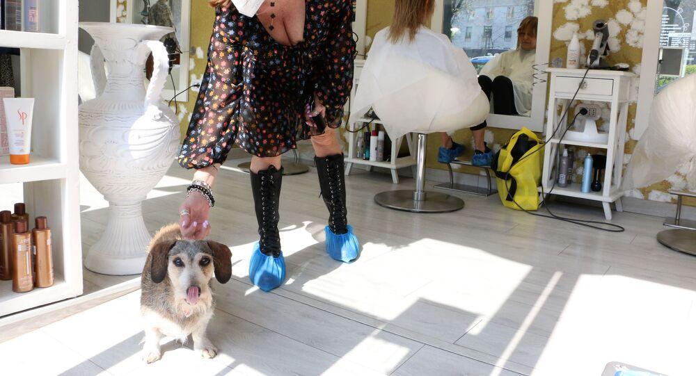 Cane in una bottega di barbiere a Milano