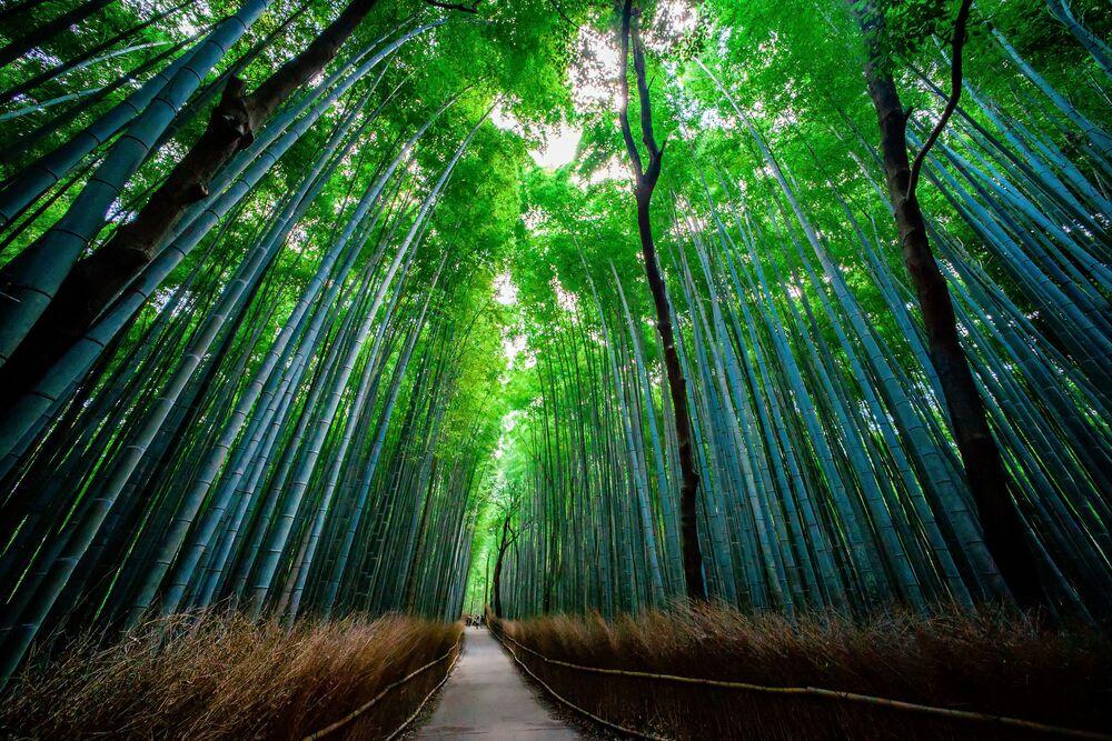 La foresta di bambù di Sagano in Giappone