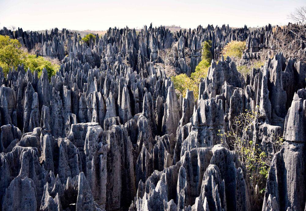 La foresta nella riserva naturale di Tsingy di Bemaraha, Madagascar