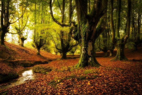 Foresta di Otzaretta, Paesi Baschi, Spagna - Sputnik Italia