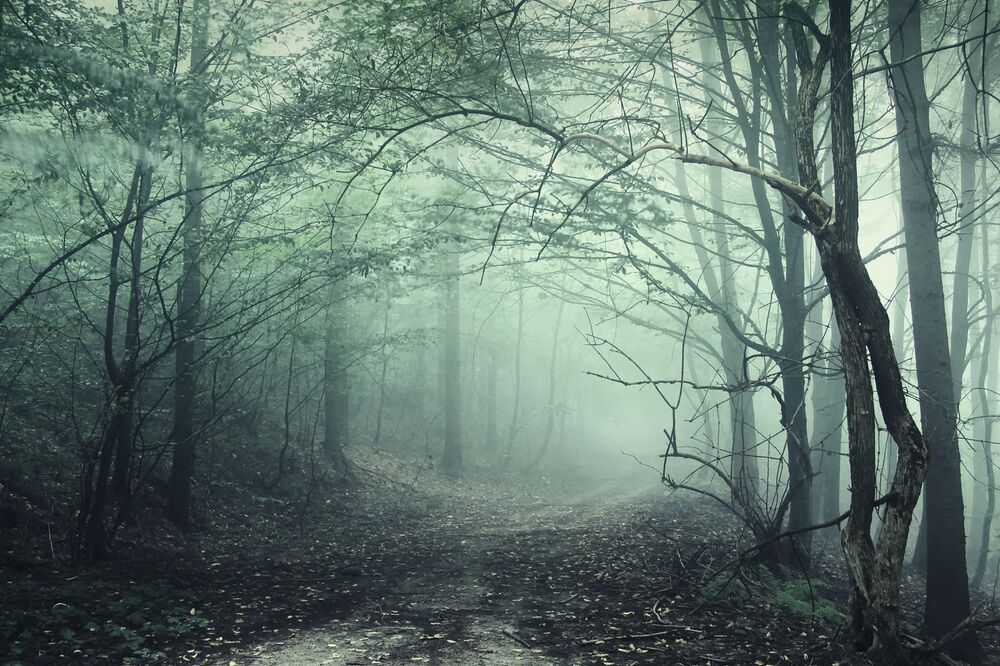 La foresta di Hoia Baciu in Transilvania, Romania