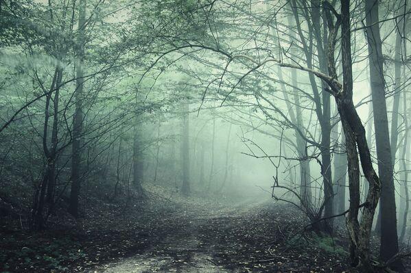 La foresta di Hoia Baciu in Transilvania, Romania - Sputnik Italia