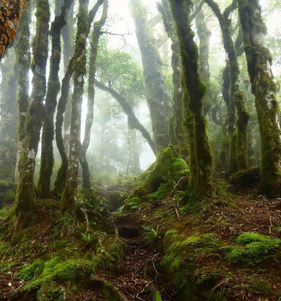 La foresta di Goblin in Nuova Zelanda