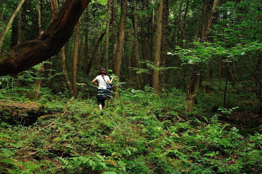 Aokigahara, o Jukai, la foresta dei suicidi situata in nord-occidentale del monte Fuji in Giappone