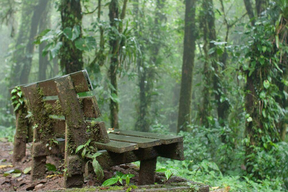 Foresta pluviale di Monteverde, Costa Rica