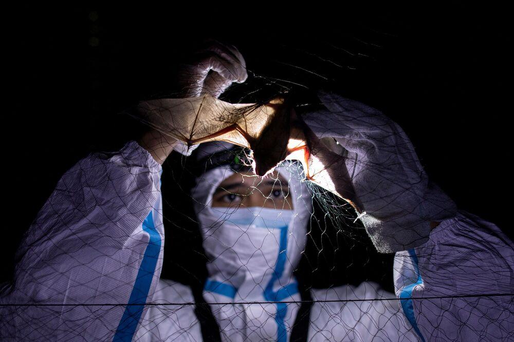 Kirk Taray, un esperto ecologista, esamina un pipistrello presso l'Università delle Filippine di Los Banos (UPLB), a Los Banos, Filippine, il 19 febbraio 2021