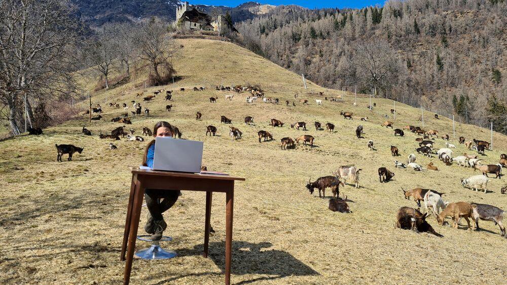 Fiammetta, 10 anni, frequenta le sue lezioni online circondata dal gregge di capre di suo padre pastore in montagna a Caldes, nel nord Italia, il 20 marzo 2021