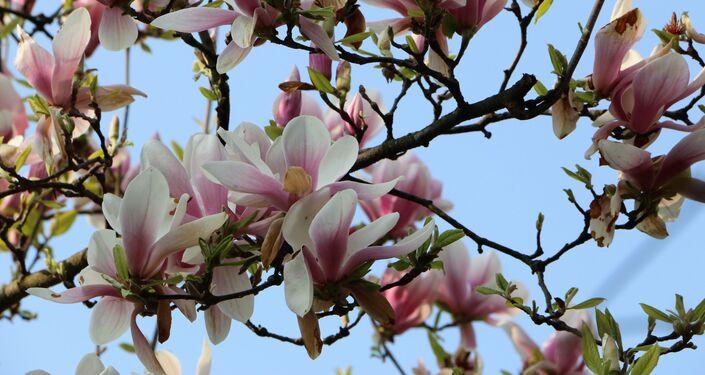 La bellezza dei fiori in un parco a Milano