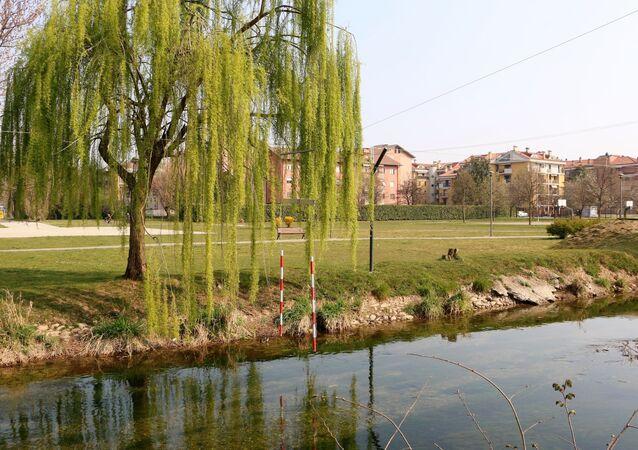 Un albero e un laghetto in un parco
