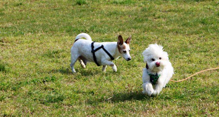 Due cani stanno camminando in un parco