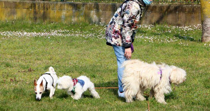 La donna con tre cani in un parco di Milano