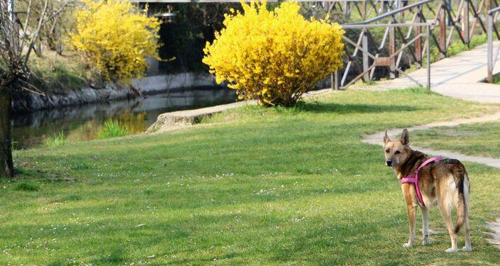 Un cane in un parco di Milano