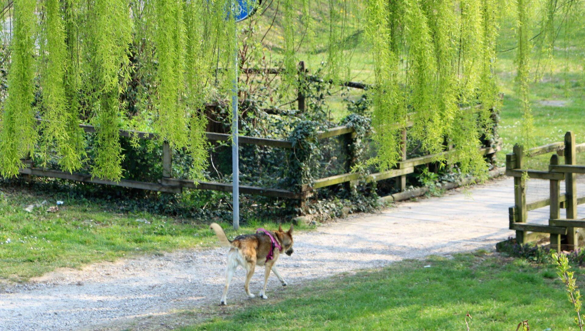Un cane in un parco  - Sputnik Italia, 1920, 14.05.2021